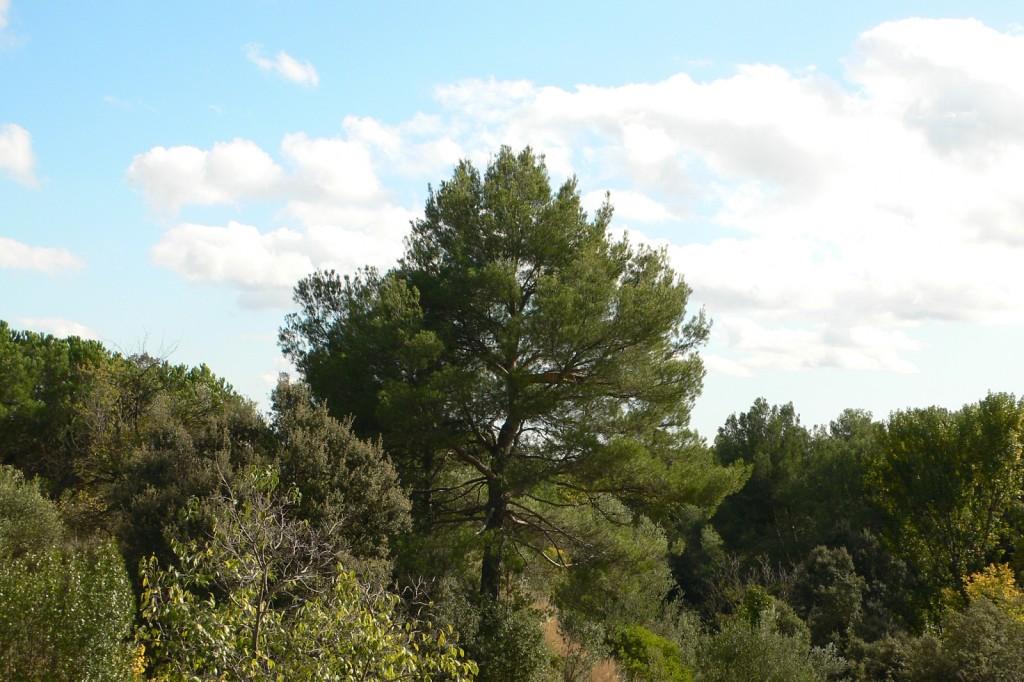 Perch (Montserrat)